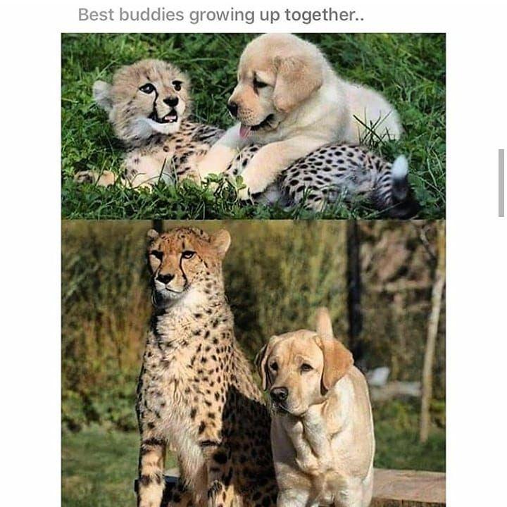 #dogs #dogsofinstagram #doglife #dogstagram #doglovers #dog #dogmom #dogsofinsta #Doggo #doglove #dogsitting...