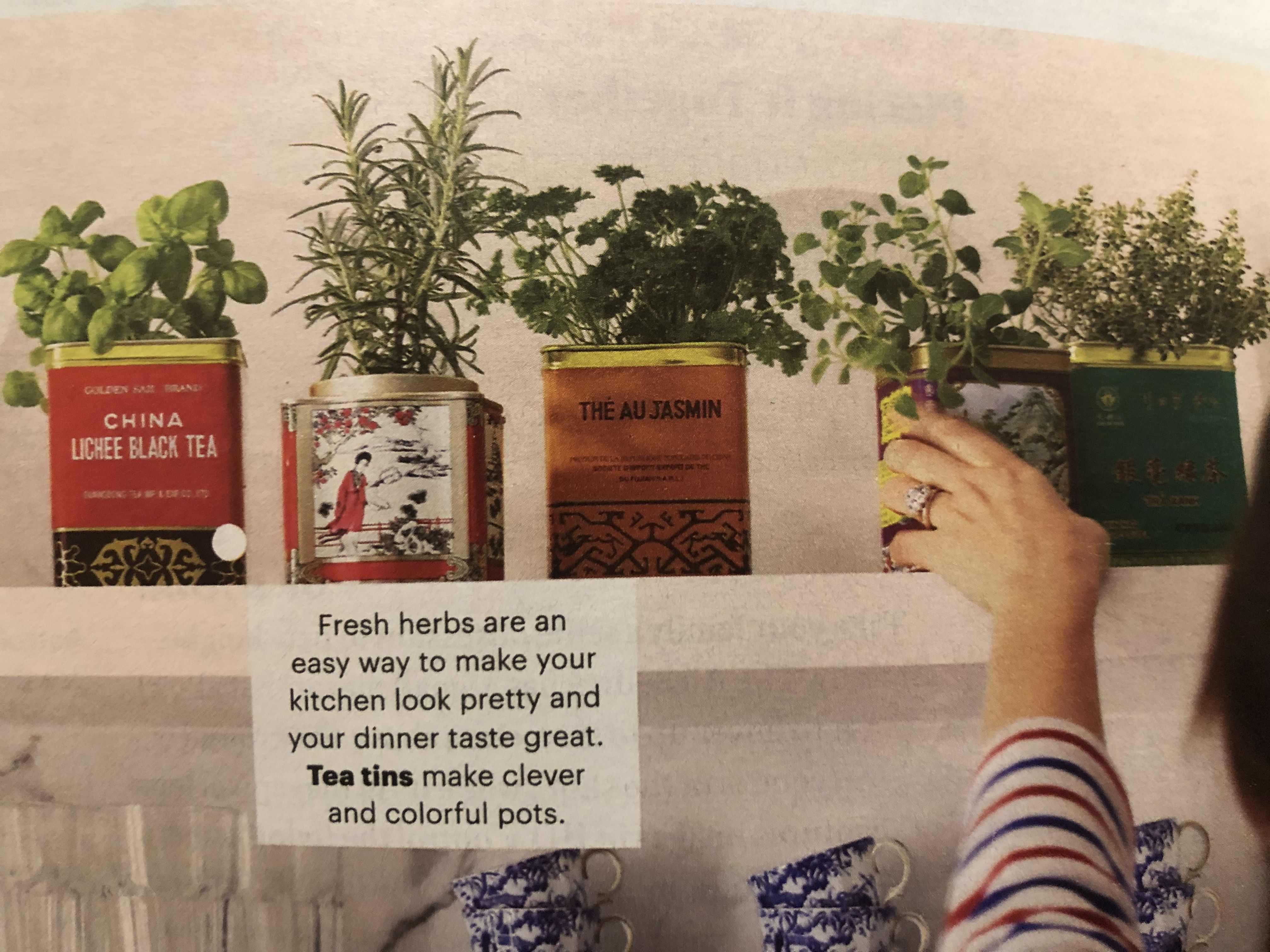 Herbs In Tea Tins Family Circle March 2019 Tea Tins Herbs Tea