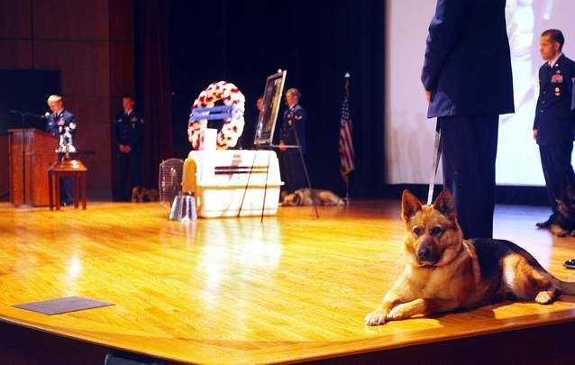 """Funeral for Military Dog 6/6/12 - Military working dog """"Ronnie"""" keeps an eye on those attending the memorial service for MWD Waldo."""