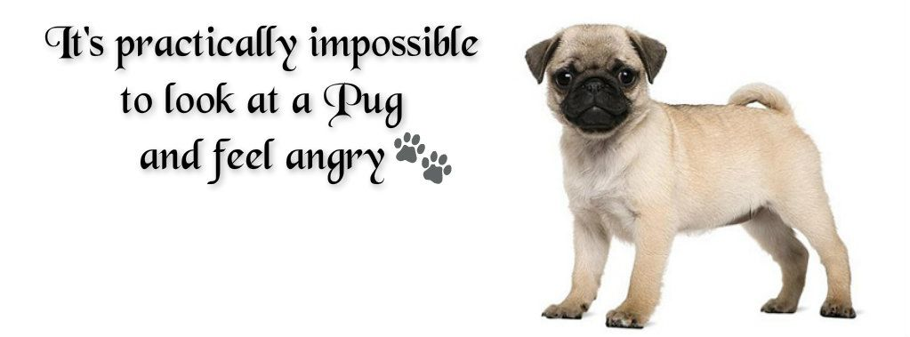 Pug Facebook Cover Photo For Your Timeline Pug Quotes Pugs
