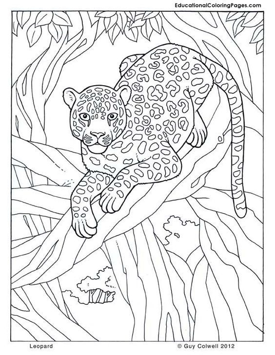 Pin On Coloring Lion Tiger