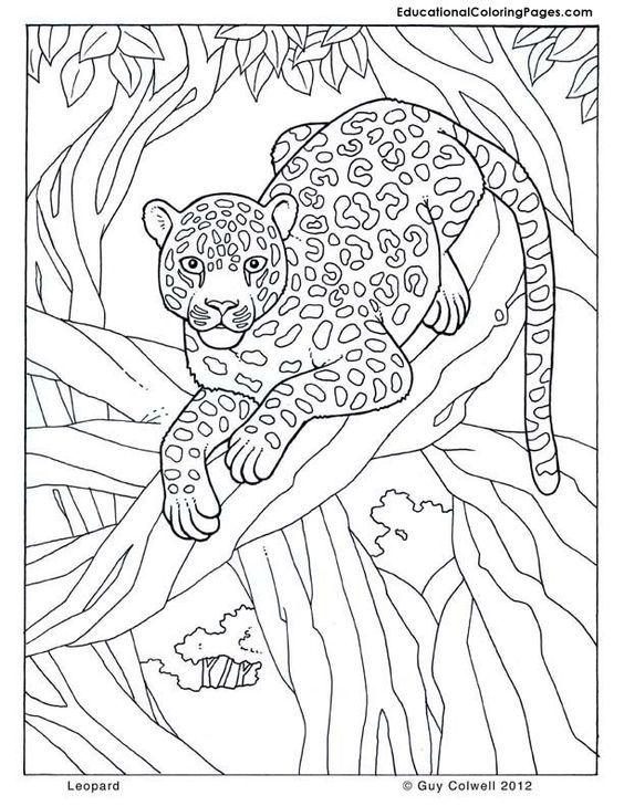 Pin Von Ana Lucia Fogar Auf Coloring Lion Tiger Malvorlagen Tiere Kostenlose Ausmalbilder Malvorlagen Fur Kinder