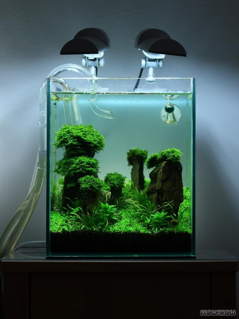Iwagumi those little plants are so cute like green for Aquarium nano cube