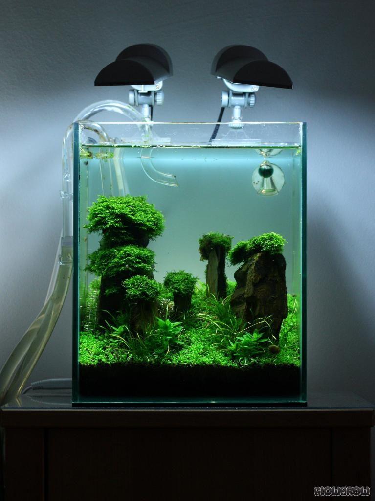 Iwagumi those little plants are so cute like green for Nano cube fish tank
