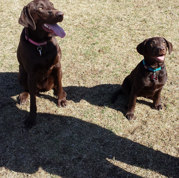 Jr and Sr at Fido Dog Park - Fond Du Lac, WI - Angus Off-Leash #dogs #puppies #cutedogs #dogparks #angusoffleash #fonddulac #wisconsin