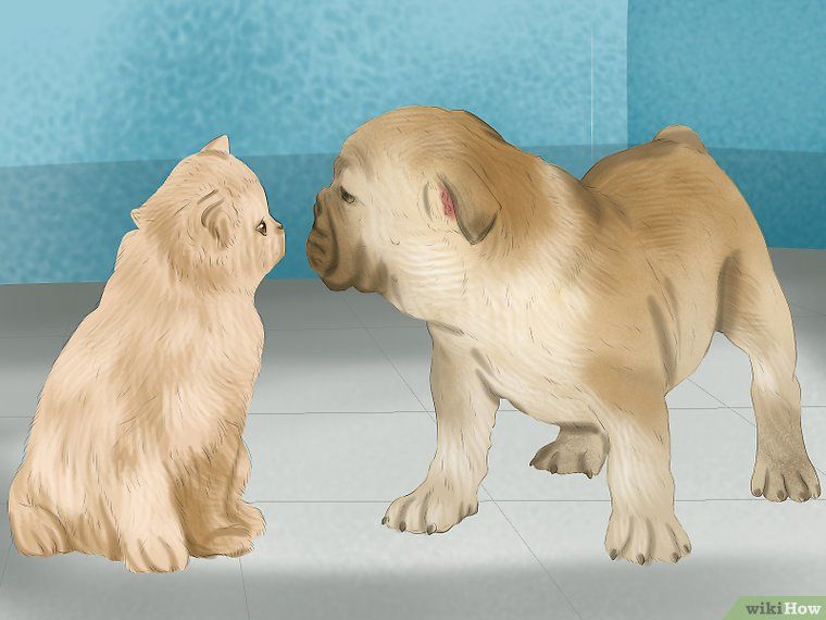 Image titled Make a Cat and Dog Get Along Step 9 Dogs