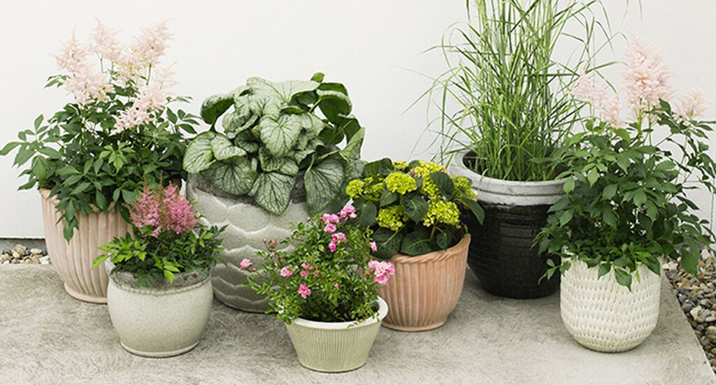 Varför plantera i krukor? – Upcycling | Re creating