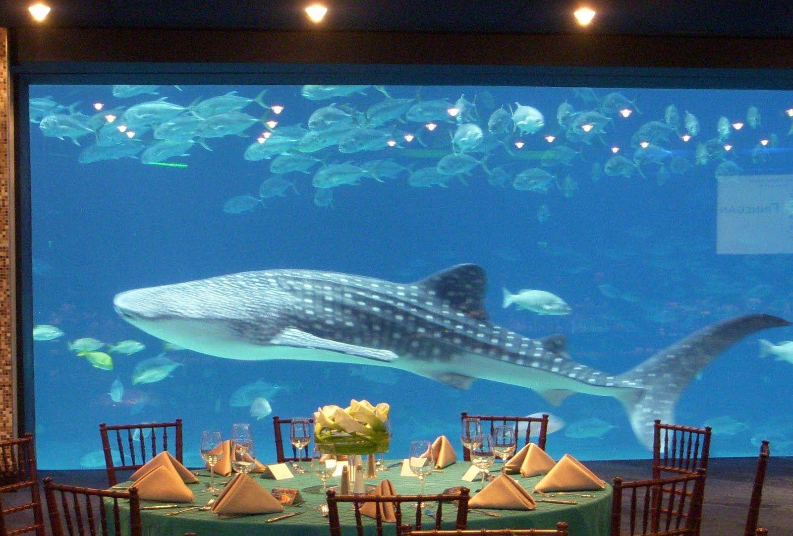 Spontaneously Add A Whale Shark To Your Decor Georgia Aquarium