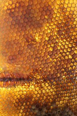 Fairtrade honning