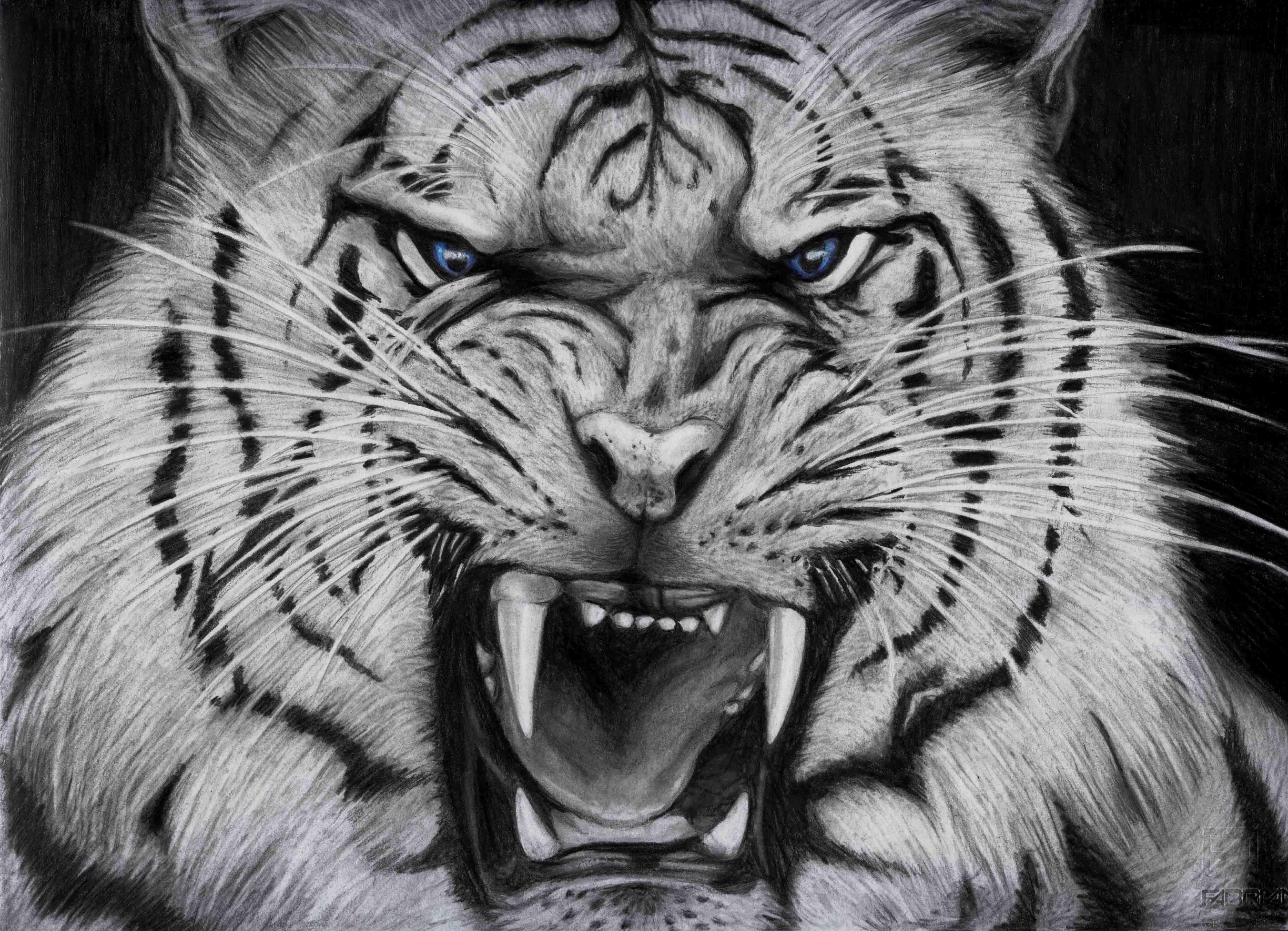 White Tiger 38 Wallpaper Hd Download Hd Wallpaper And Desktop Backgrounds Tiger Wallpaper White Tiger Tiger Head Tattoo Tiger tattoo design wallpaper