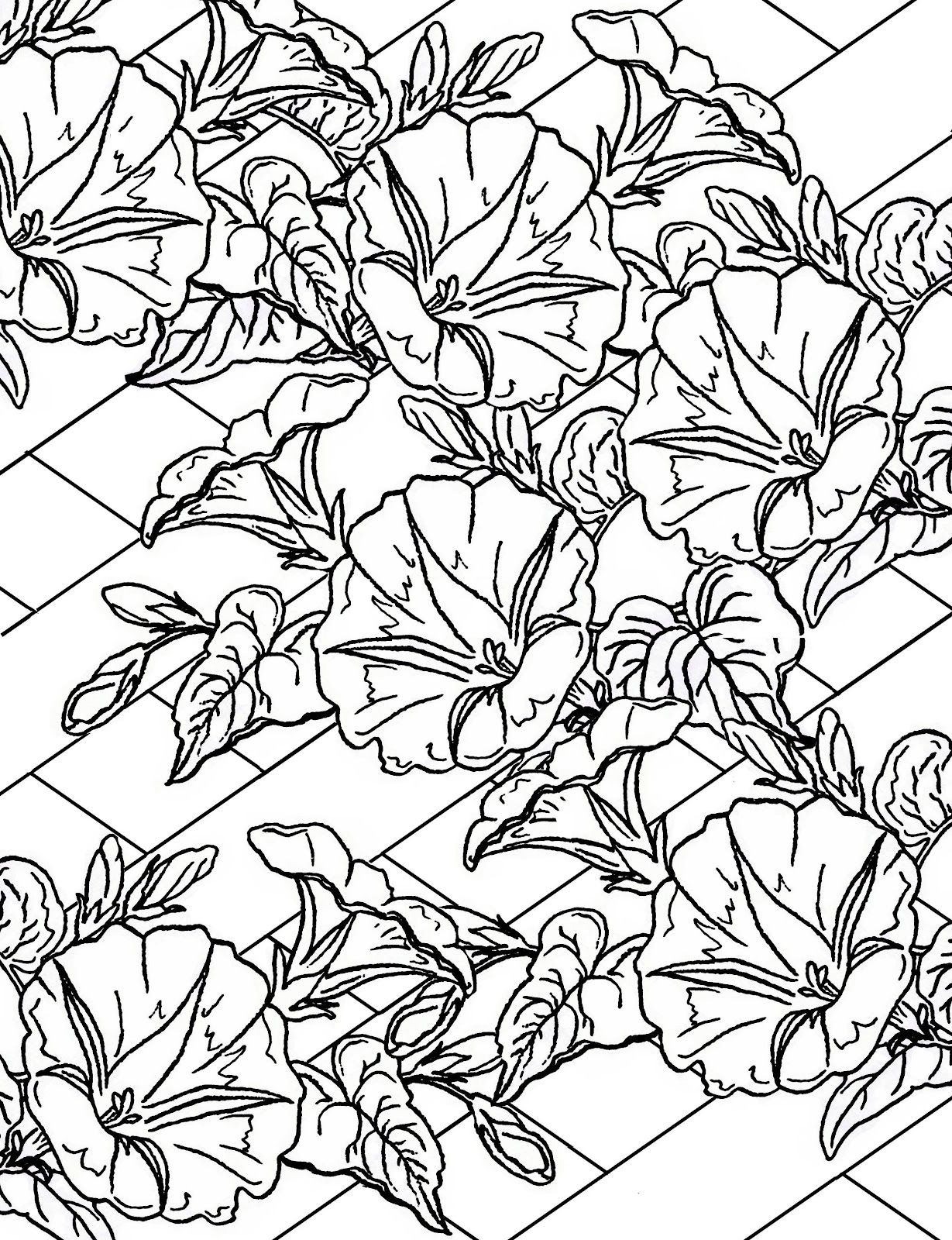 Morning Glory Clip Art Printable Detailed Coloring Pages