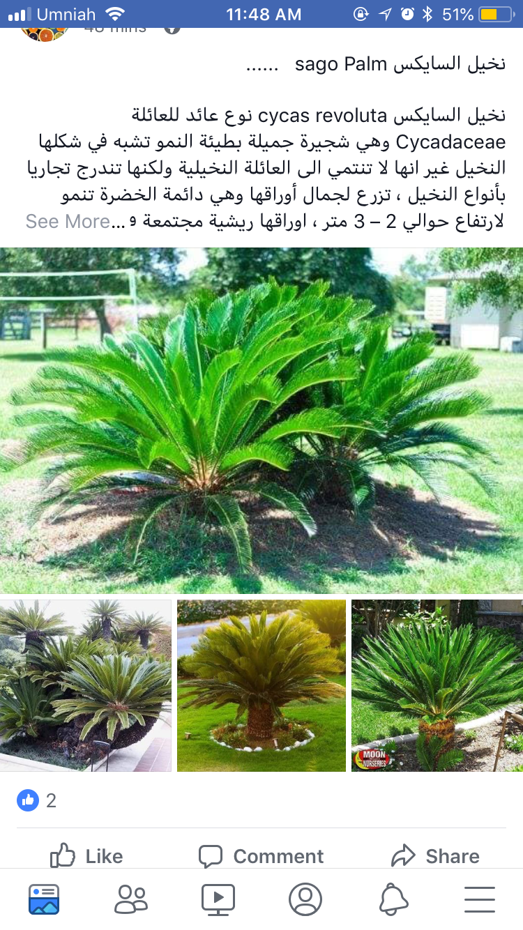 Pin By Kirkuk On Plants Trees To Plant Growing Plants Plants