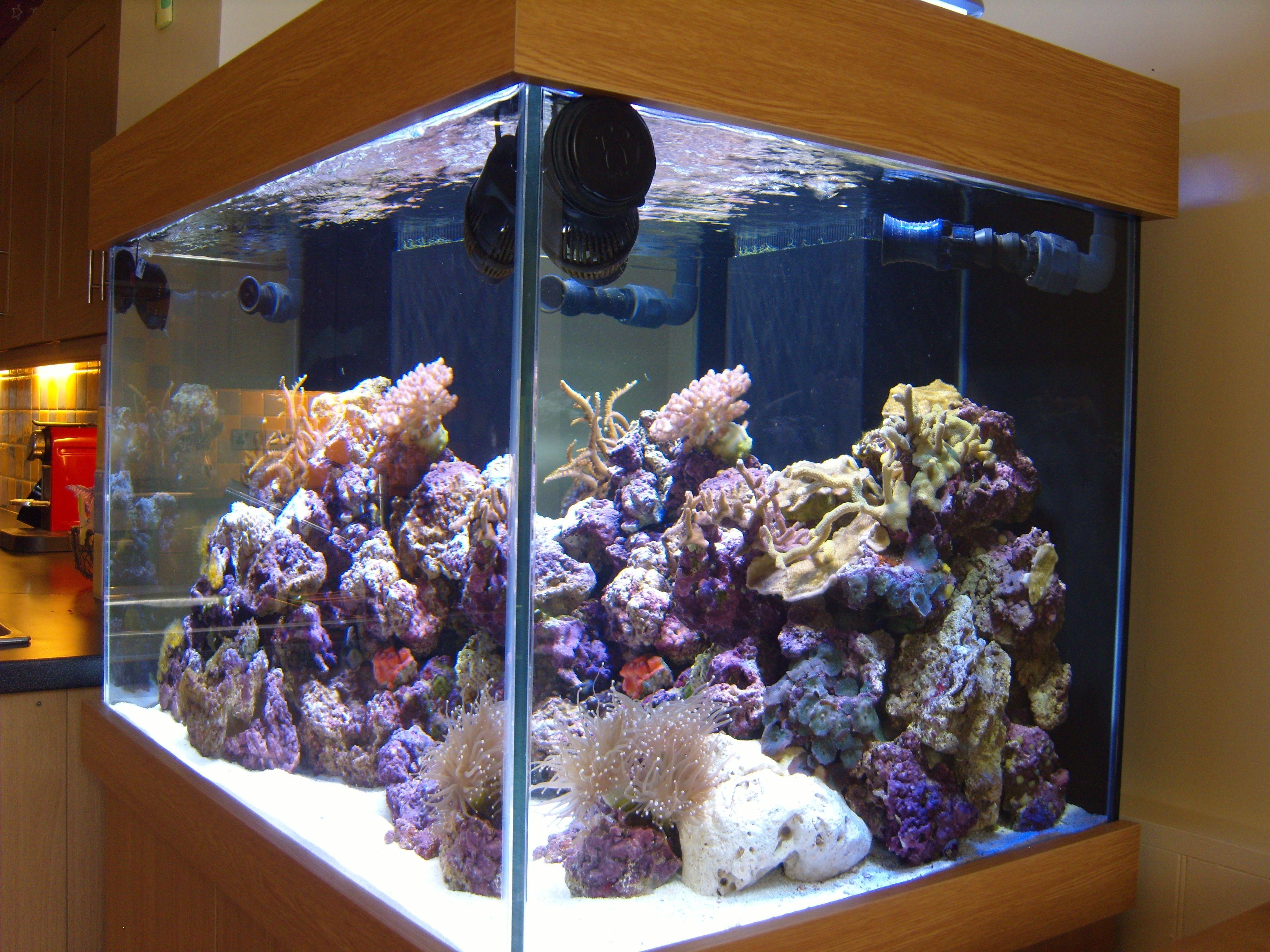 Aquarium fish tank manufacturers - Marine Aquarium 36x24x24 With Cabinet And Sump Tank From Prime Aquariums Your Custom Fish Tank