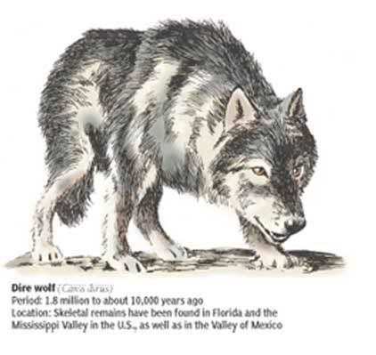 Pin By Shea On Prehistoric Animals Extinct Wolves Dire Wolf Animals