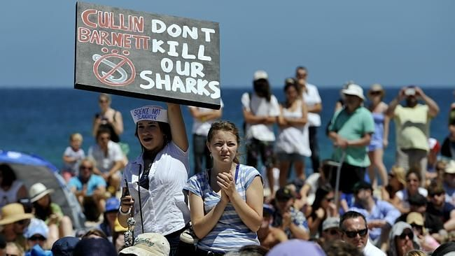 "Protests in Washington state against a proposed shark ""cull."""