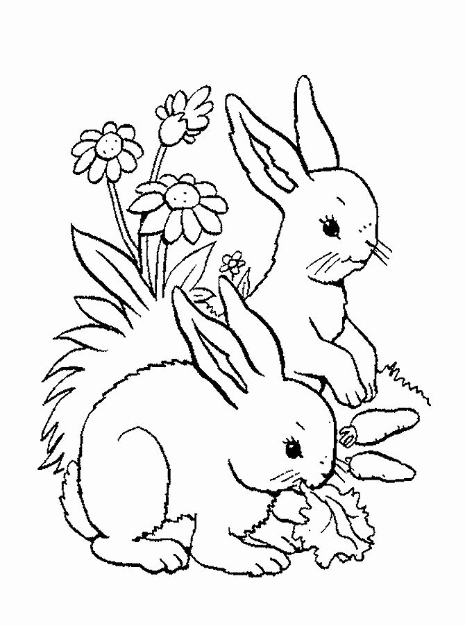 Woodland Animals Coloring Page Awesome Woodland Baby Animals Coloring Pages Coloring Pages Animal Coloring Pages Animal Coloring Books Coloring Pages