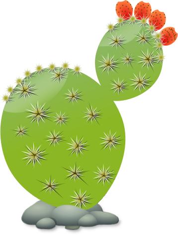 Plant cactus. Free clipart public domain