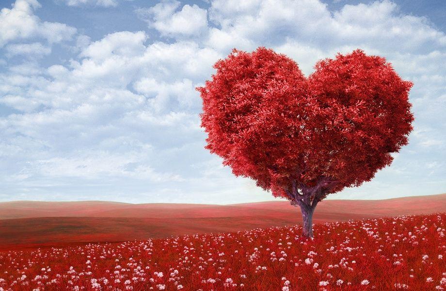 Love Tree 4k Ultra Hd Wallpaper 4k Wallpaper Net Arbre De Coeur Belle Image De Coeur Image Coeur