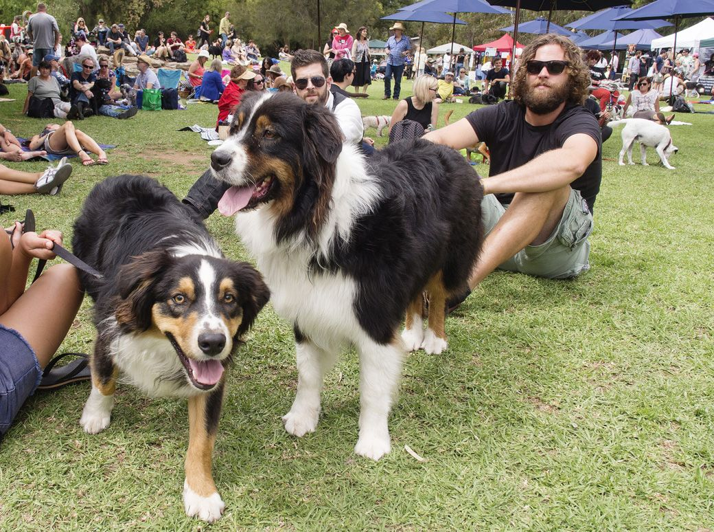 Dogapalooza Adelaide Dog Friendly Music Festival March 6 Dog Friends Dogs Dogs Day Out