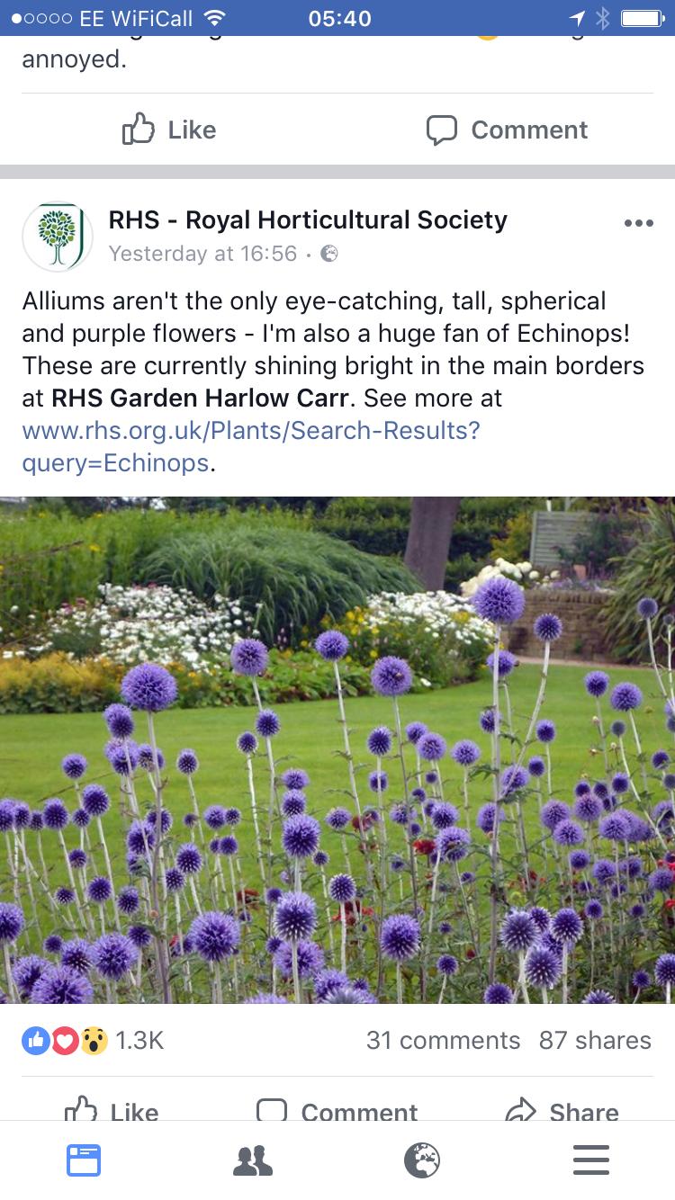 Blumen Gießen Englisch