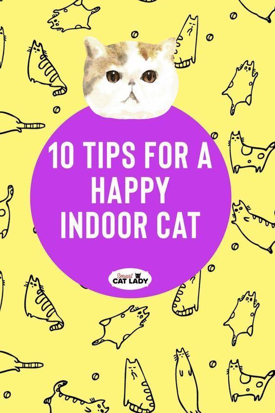 60 Cat Mom Ideas In 2021 Cat Mom Cats Cat Care
