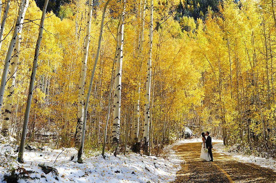 Vail Colorado Fall Wedding Photos In An Aspen Grove