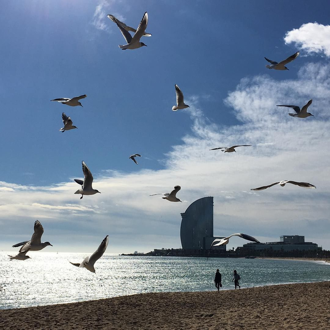 Winter In Barcelona @ Playa Sant Sebastia
