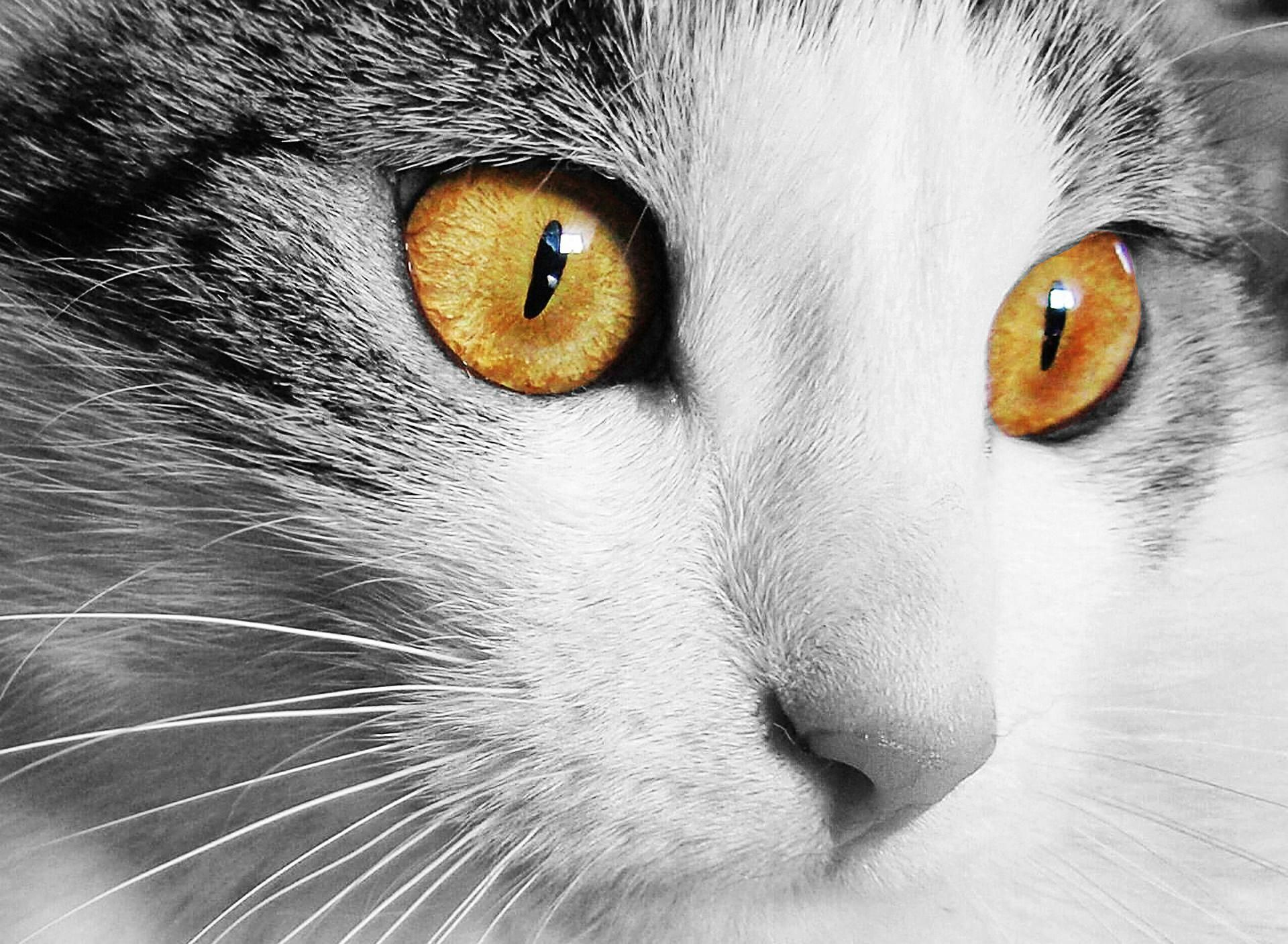 Are Cats Color Blind Id 6164520407 Cat Eye Discharge Cats Cat Care