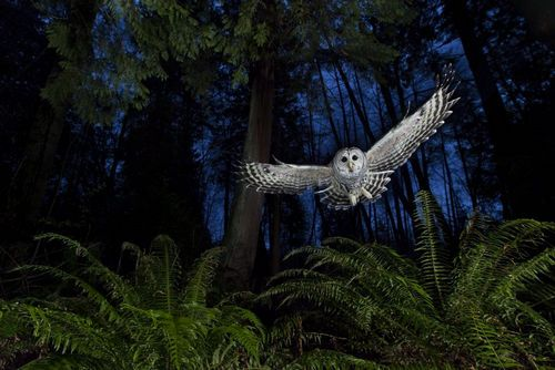 Concurso fotografía salvaje 2013: Wildlife Photographer of the Year