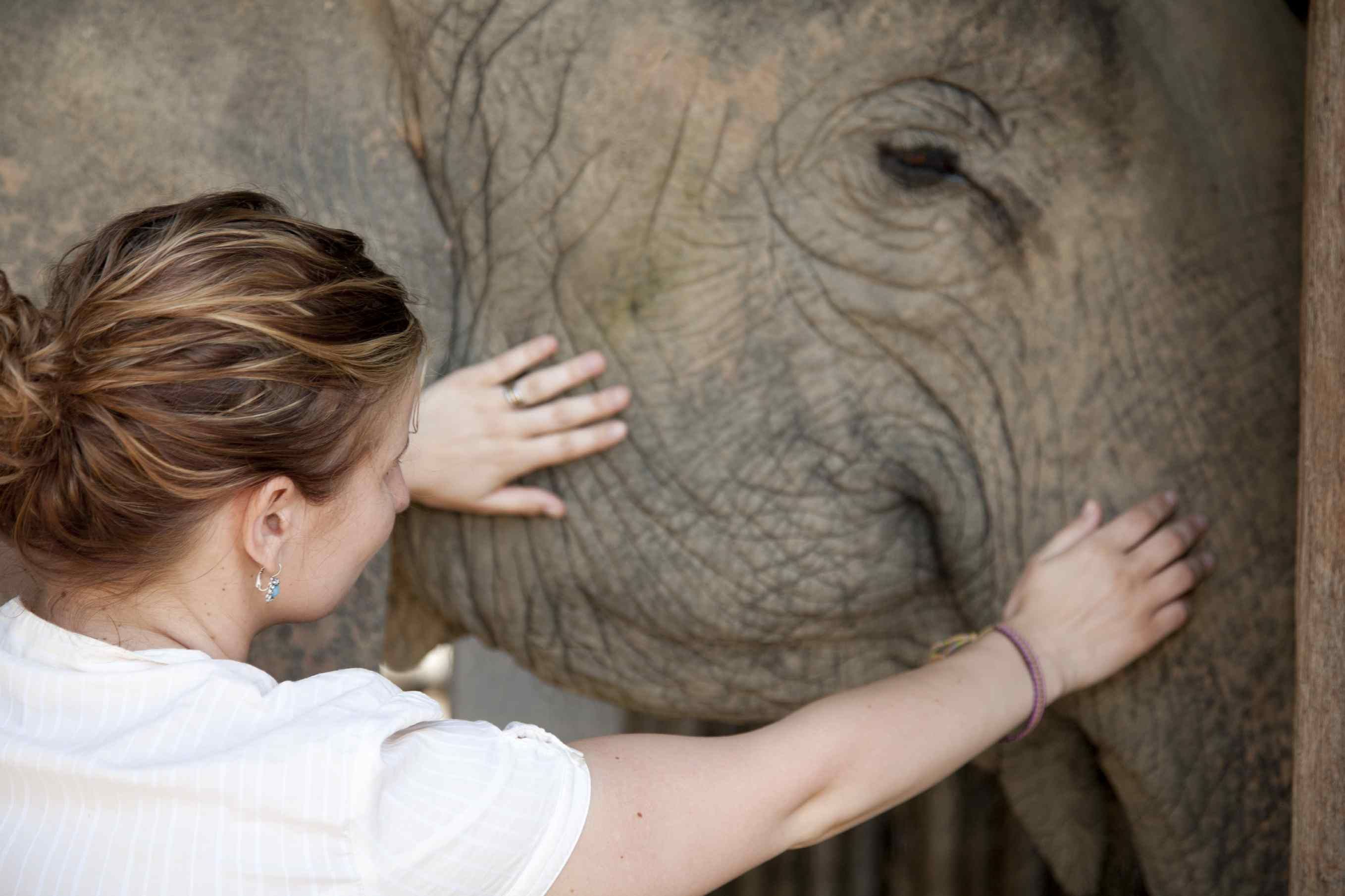 We love elephants! You will visit an elephant camp in Thailand while volunteering there.