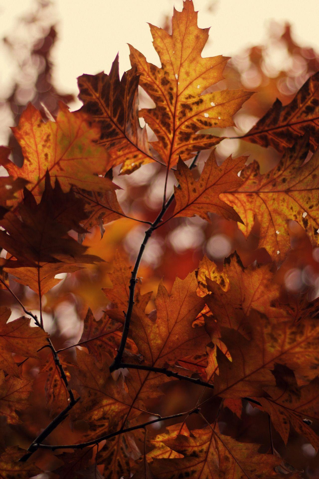 Hojas de otoño.......