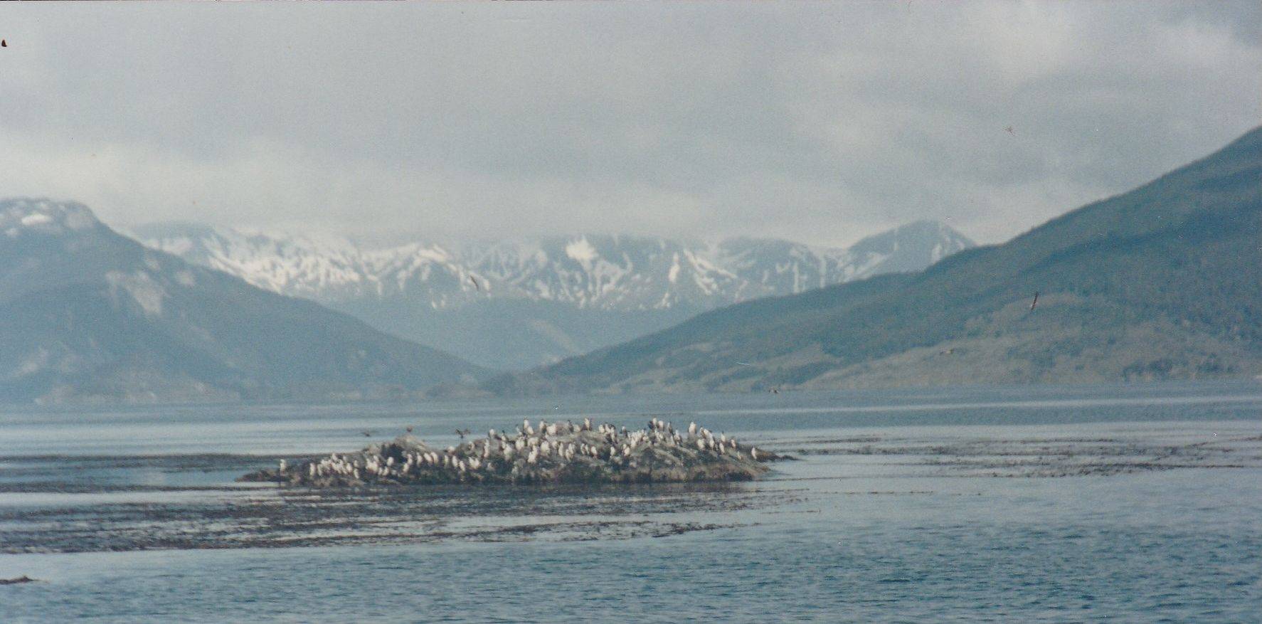Out In The Beagle Channel Outside Ushuaia Southern Cone Tierra