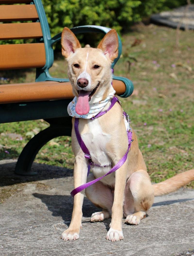 Adopt Reese On Labrador Retriever Pets Animals