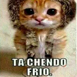Claro Que Hace Frio Gatitos Divertidos Mascotas Memes Memes De Animales Divertidos