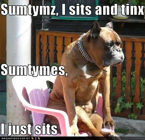 funny-dog-pictures-sits-tinx.jpg (500×484)