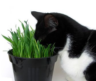 Is Catnip Safe For Dogs What Is The Impact Dogs Cat Having Kittens Catnip