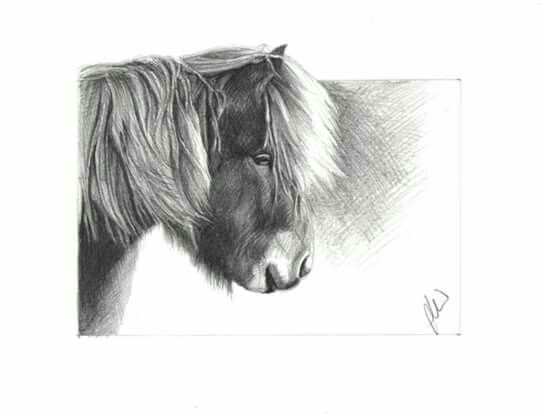 Icelandic pony sketch graphite pencil on watercolour paper 6 x