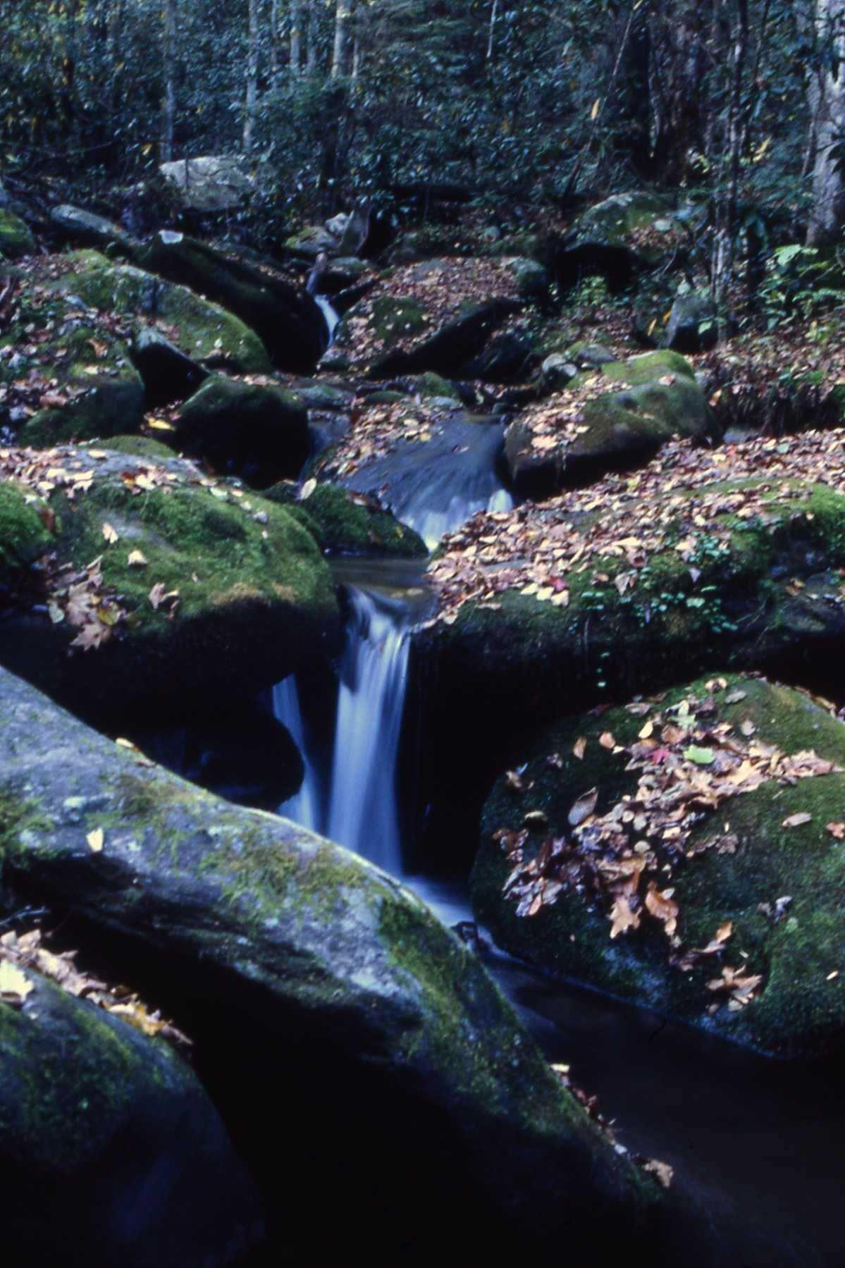 Cherokee Nat Forest Tenn