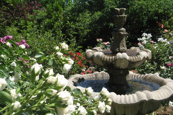 Mcgill Rose Garden Charlotte Wedding Venue Spring Inspiration