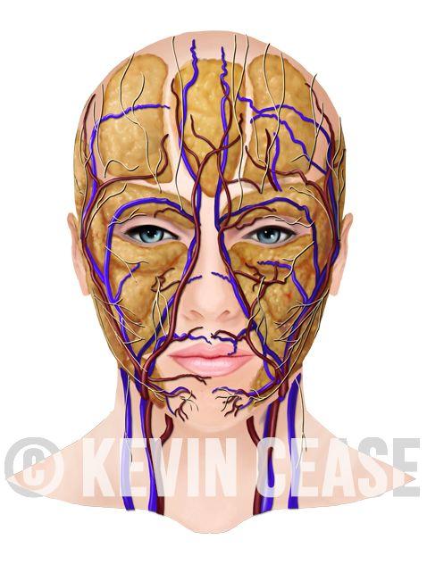 Tri pad facial bones video just