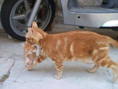 But Mom I Don T Want To Go In Cats Crazy Cats Orange Cats
