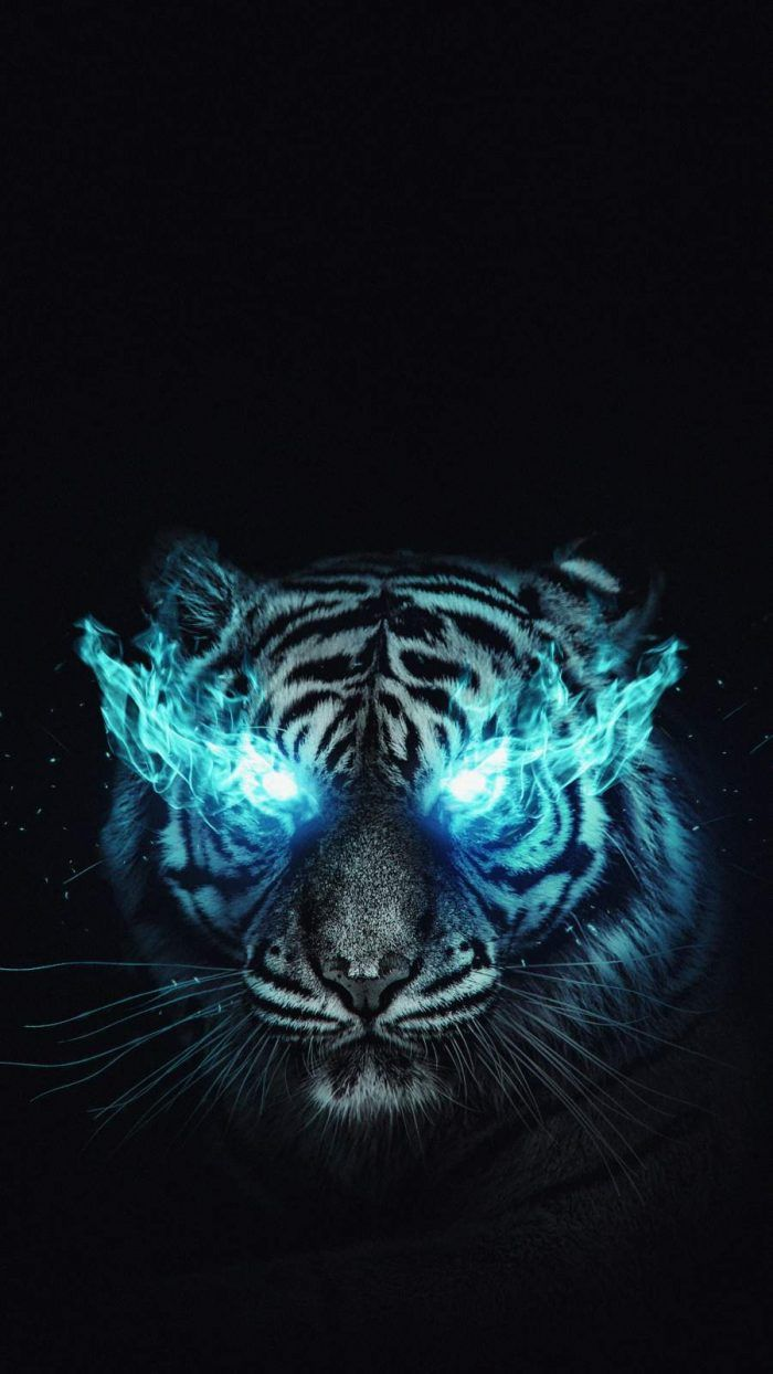 White Tiger iPhone Wallpaper - iPhone Wallpapers