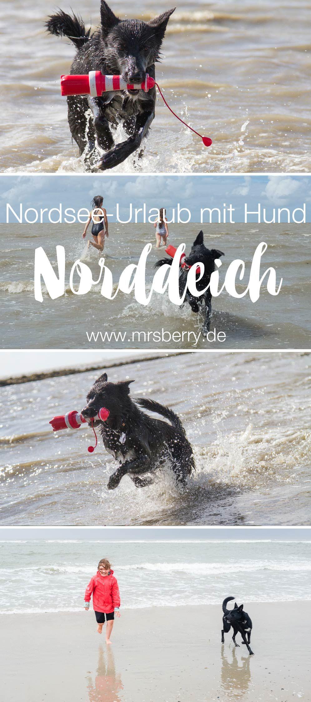 Norddeich 16 Freizeittipps Fur Familien 1 Hunde Und Kinder Urlaub Mit Hund Urlaub Mit Hund Nordsee