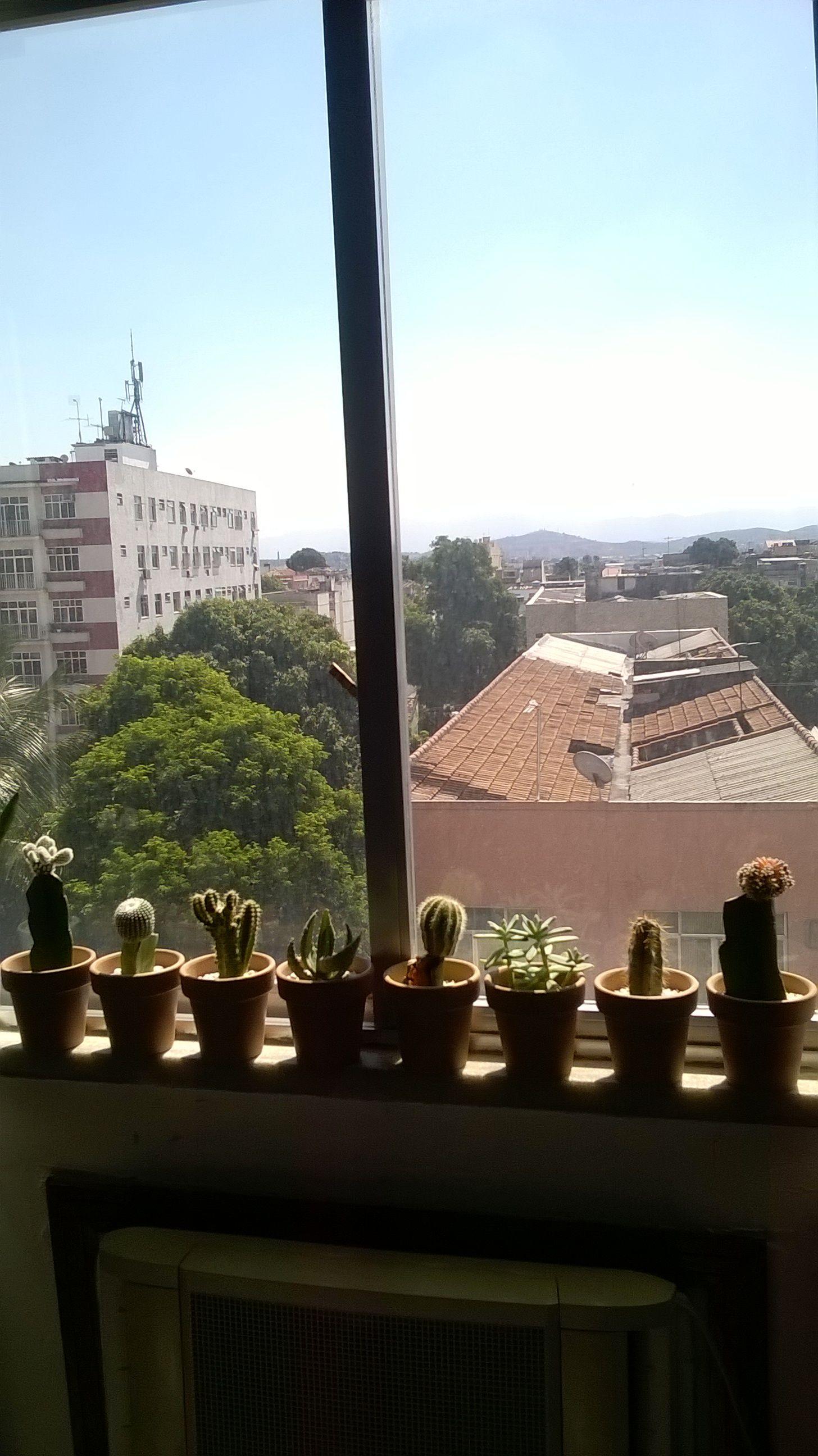 Meu jardim 🏡 de janela...bom dia à todos que virem essa imagem...Um viva para a Natureza!