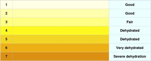 HOW CAN I CHECK FOR DEHYDRATION? THE URINE COLOR CHART Blog - sample urine color chart