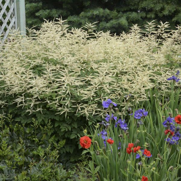 39b48c52f1f9f7746b8a455b6bdb616b - What Zone Is Thunder Bay For Gardening
