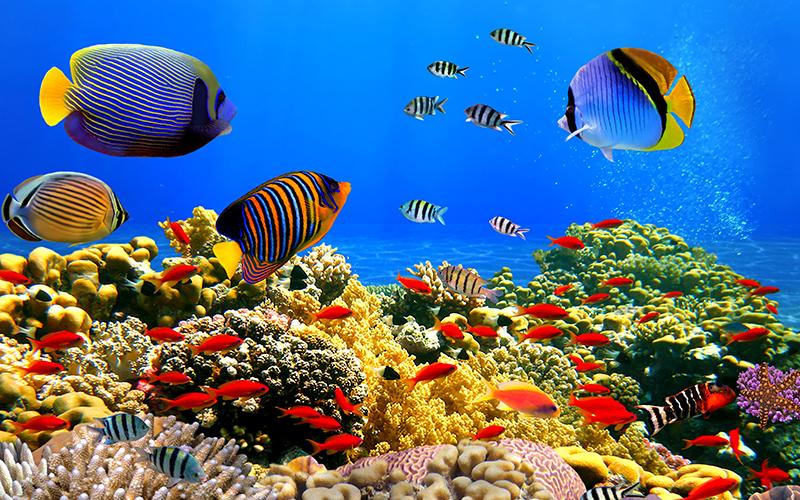 27 Pemandangan Bawah Laut Karang Ini 4 Nirwana Laut Indonesia Yang Wajib Kamu Kunjungi Airy Download Hd Dunia Bawah Laut Di 2020 Pemandangan Mural Kertas Dinding