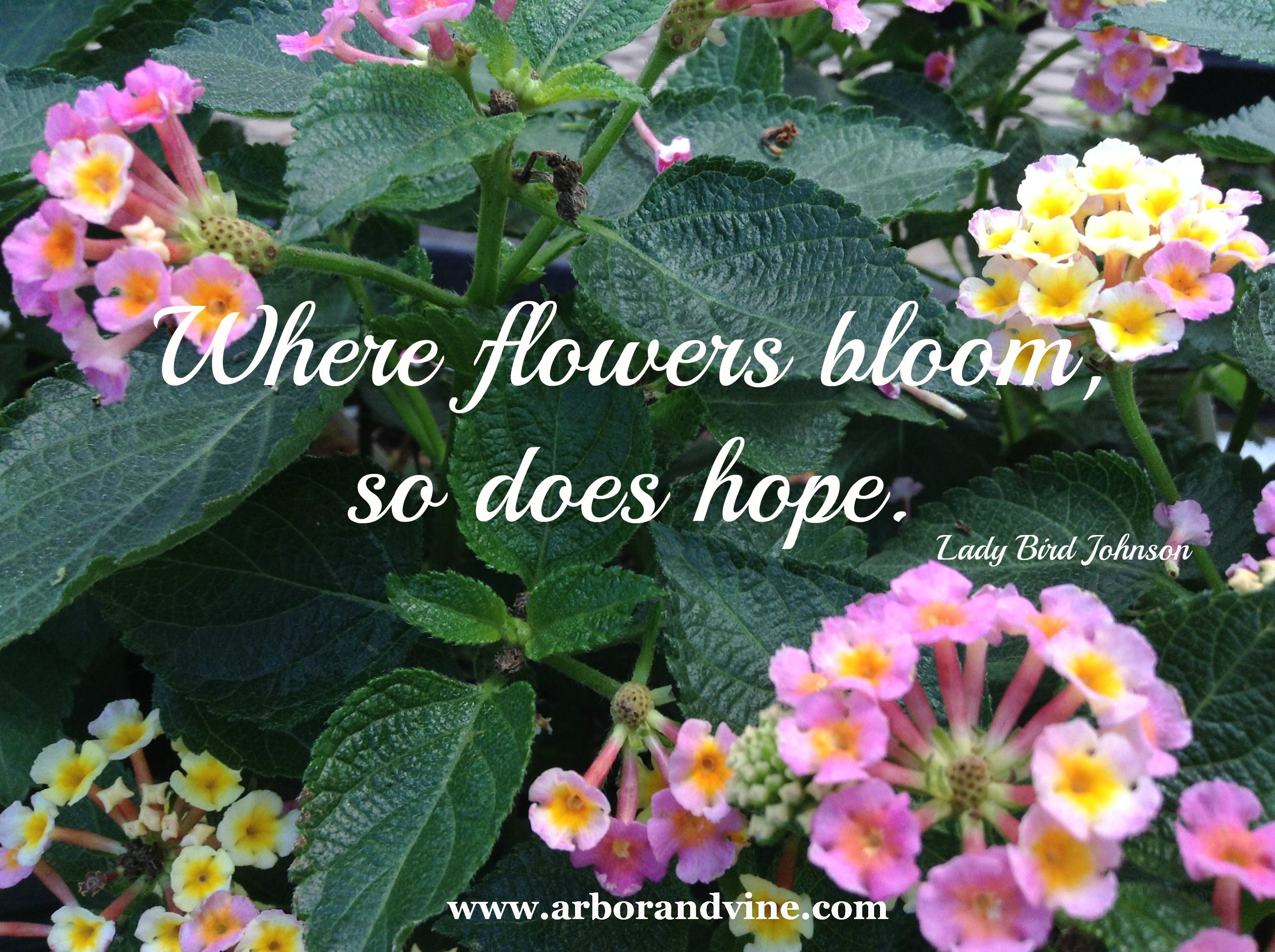 Pin By Arbor And Vine On Garden Humor Quotes Poems Flower Quotes Garden Poems Gardening Humor