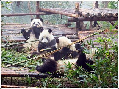 elämää ja elämyksiä: Chengdu China