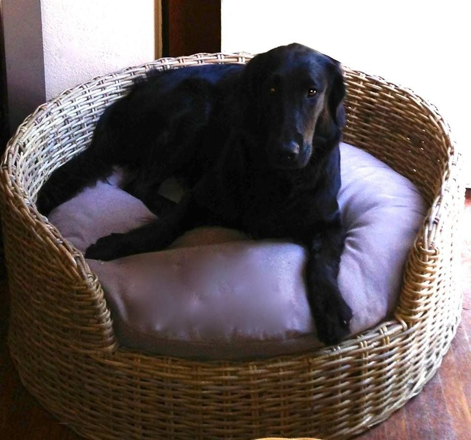 Wicker Dog Bed Medium Size Wicker Paradise Dog bed